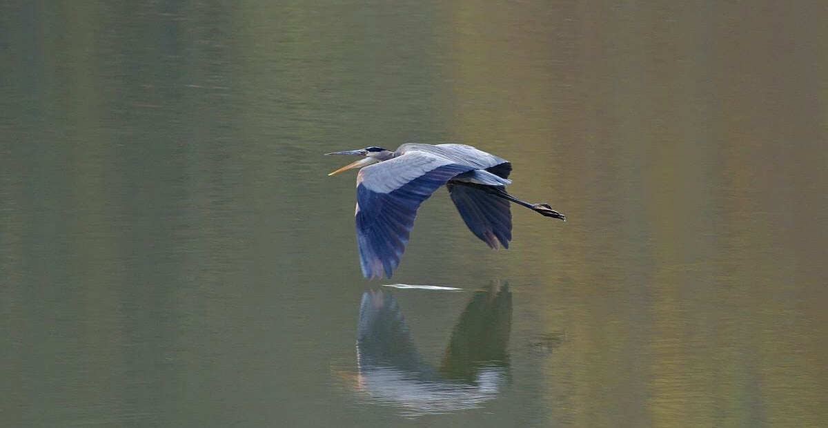 Bird flying across the lake